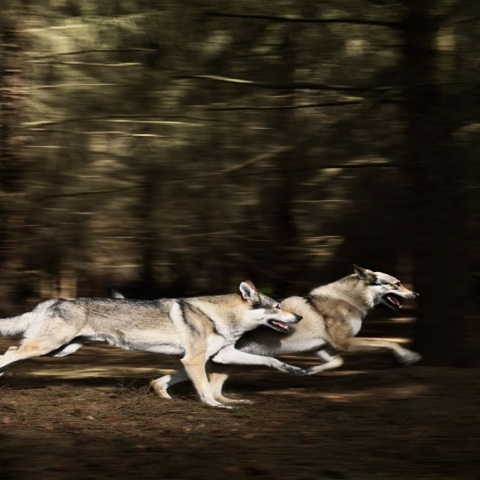 صور: الكلاب الممنوعة في الإمارات