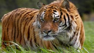 حيوانات مهددة بالانقراض