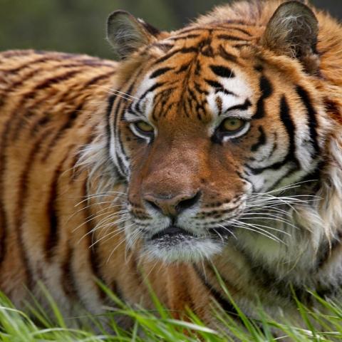 Photo: Endangered Species