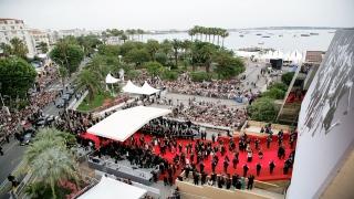 الإمارات تشارك في مهرجان كان