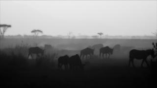 Unique Extinct Animals