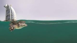 إطلاق 40 سلحفاة في مياه دبي