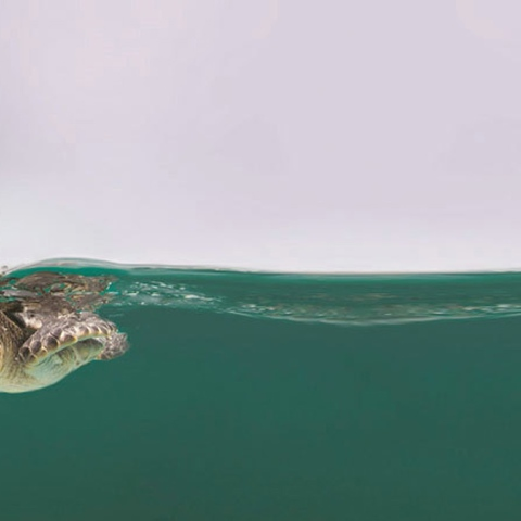 Photo: Turtles New Beginning