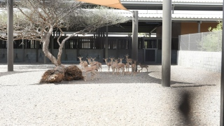 288حيوانًا إلى متنزه البردي