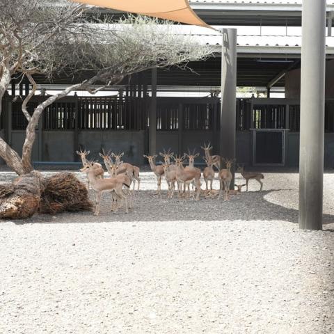 صور: 288حيوانًا إلى متنزه البردي