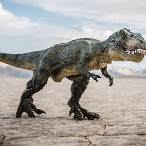 صور: مر من هنا ديناصور