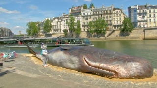 Truth About Parisian Whale
