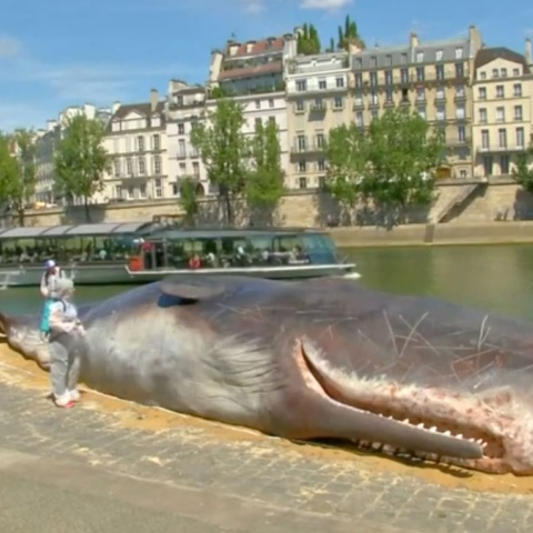 Photo: Truth About Parisian Whale