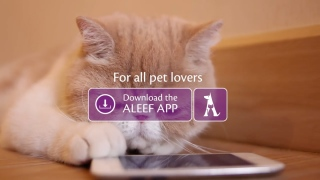 'Aleef' Animal Adoption Platform