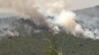 """""""حرائق الغابات"""" أزمة عالمية"""