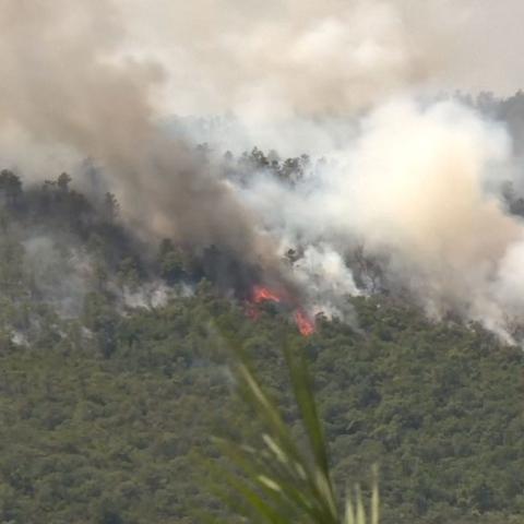 """صور: """"حرائق الغابات"""" أزمة عالمية"""