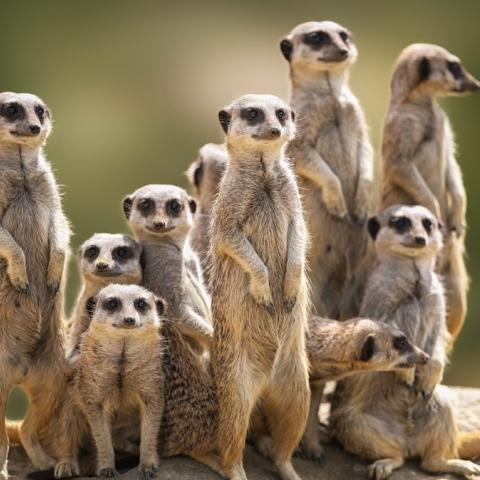 Photo: Animal Superstars