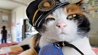 Train-Travelling Cats