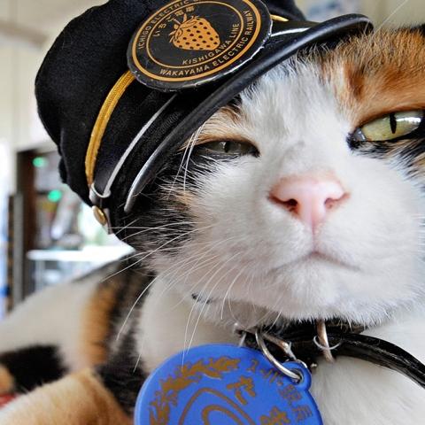 صور: قطط لم تعد ضالة