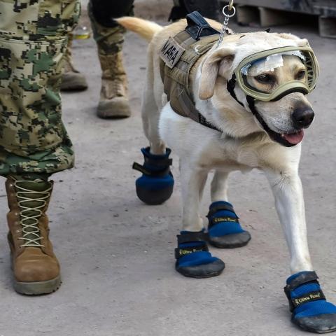 ${rs.image.photo} Frida The Superdog