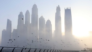 Photo: A Foggy Day? Don't Panic