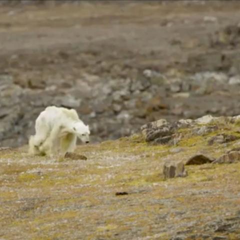 صور: عشنا في عصر الدب القطبي!