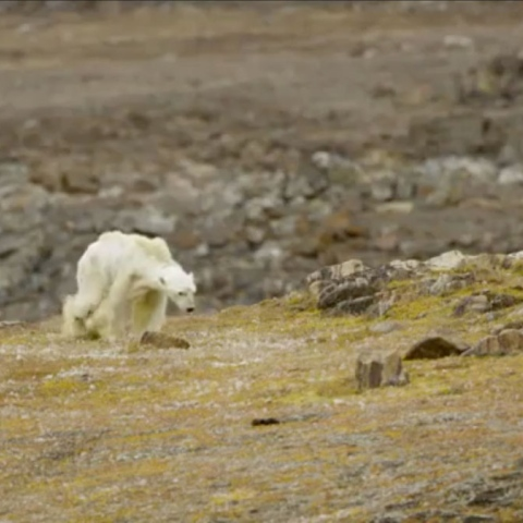 Photo: We are Living in a Polar Bear Era!