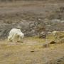 Image-We are Living in a Polar Bear Era!