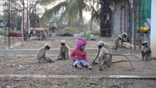 A Special Bond Between A Child & 20 Monkeys