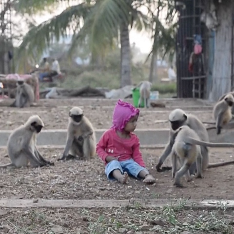 ${rs.image.photo} A Special Bond Between A Child & 20 Monkeys