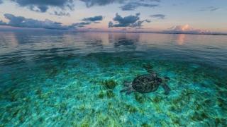 Turtles Feminine Scene