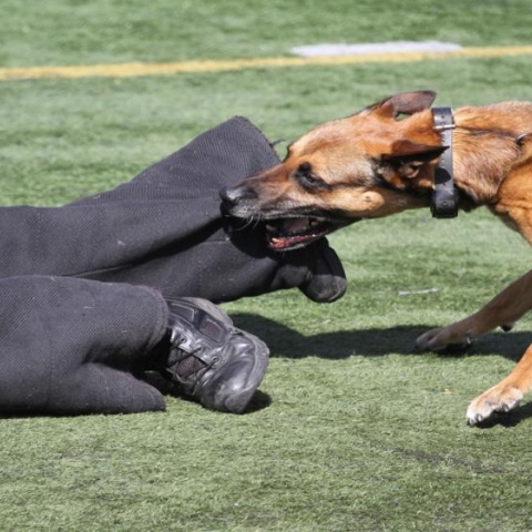 صور: إذا عضّك كلب