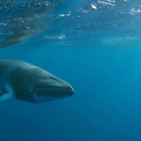Photo: Marine Life Is DYING