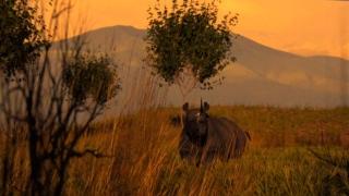 تخيل عالماً بدون وحيد القرن