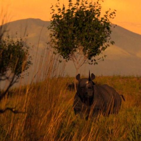 صور: تخيل عالماً بدون وحيد القرن