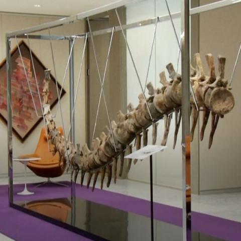 صور: ذيل ديناصور لبناء المدارس