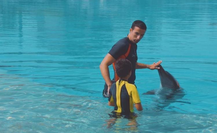 صور: فابيو سيلفيرا: الدلافين طفولة ومرح