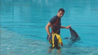 فابيو سيلفيرا: الدلافين طفولة ومرح