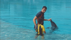 Fabio Silveria : passion for dolphins