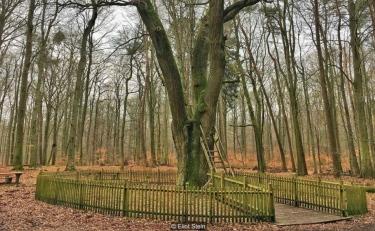صور: شجرة تمنح العشّاق أملاً بالزواج