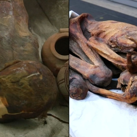 Photo: Mummies Have Tattoos!