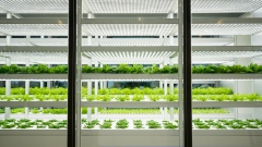 The UAE is the first Arab country to adopt vertical farms
