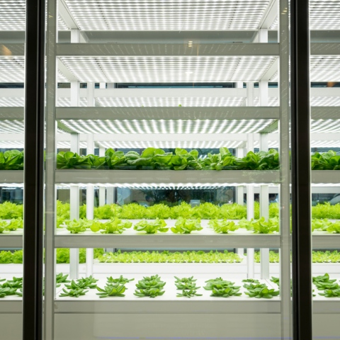 Photo: The UAE is the first Arab country to adopt vertical farms