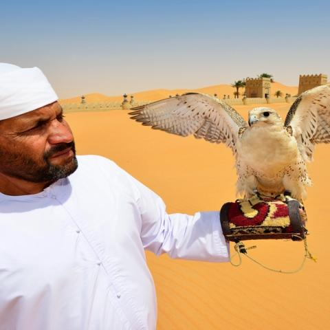 ${rs.image.photo} لماذا يعشق الإماراتيون الصقور؟