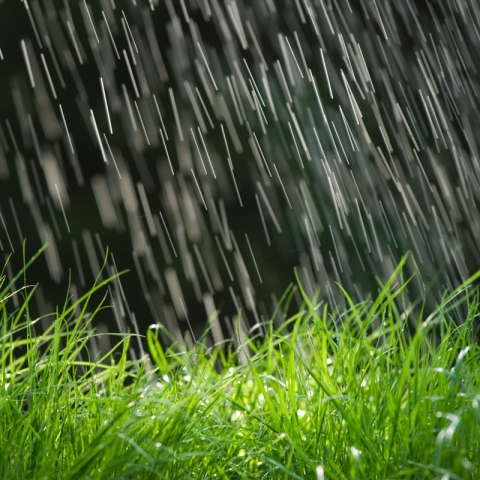 Photo: Why does rain smell so good?