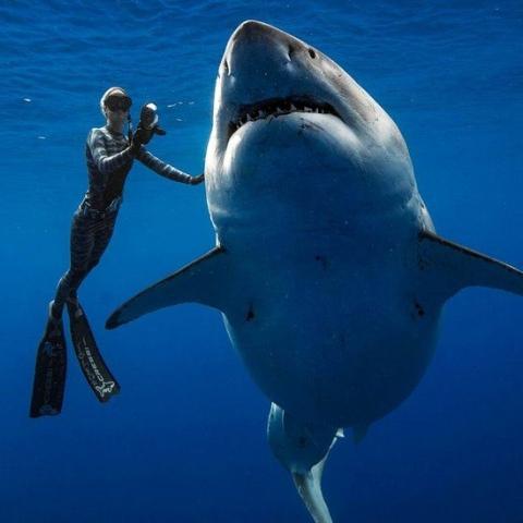 صور: هل تتخيل أن يكون لسمكة قرش حساب على تويتر وكذلك 13 ألف متابع؟!