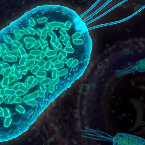 صور: البكتيريا في محطات الفضاء