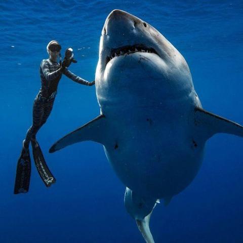 صور: هل تتخيل أن يكون لسمكة قرش حساب على تويتر وكذلك 19 ألف متابع؟!