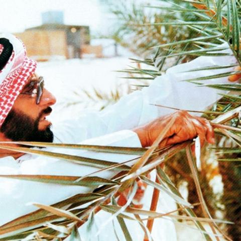صور: الإمارات من أهم 5 دول في إنتاج وتصدير التمور
