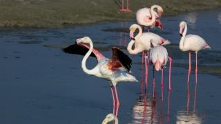 Dubai's Flamingos Take Flight