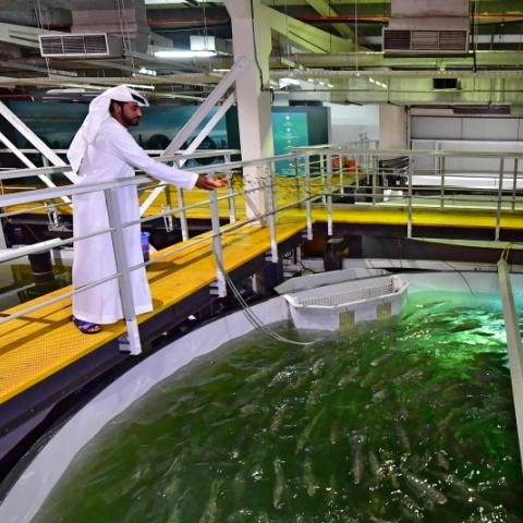 "${rs.image.photo} ""فيش فارم"" تستنسخ البيئة الباردة وتنتج سمك السلمون في دبي!"