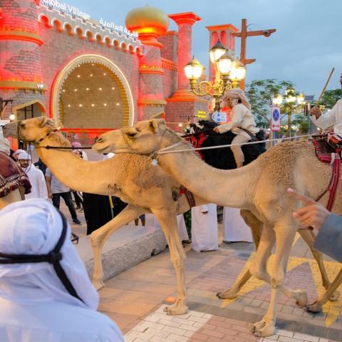 صور: رحلة الهجن.. إلى أعماق صحراء دبي