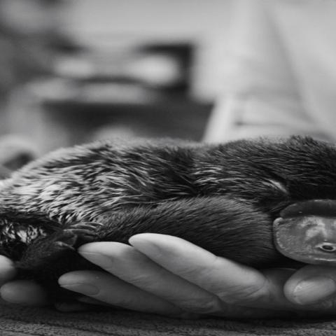 صور: عائلة إيروين تنقذ 90 ألف حيوان بريّ خلال حرائق غابات أستراليا الكبرى