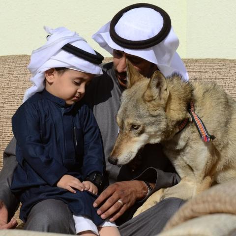 ${rs.image.photo} أسرة سعودية تعيش مع الذئاب منذ 11 عامًا