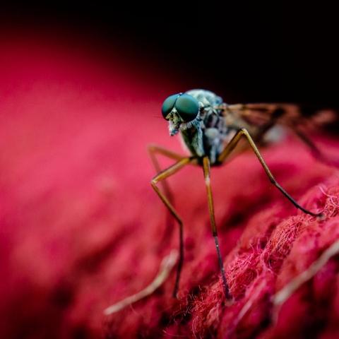 صور: البعوض..لماذا يختارك أنت وكيف يمكنك تجنبه؟